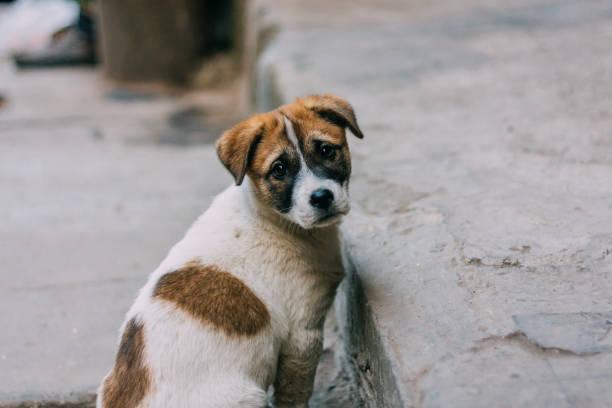 悲しい白と茶色の野良犬
