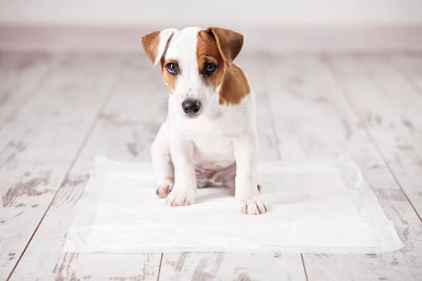 子犬に吸収トイレ
