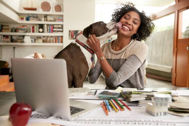 帰宅すると犬が喜ぶのはなぜ?家に帰ると吠えてしまう犬の対策法もご紹介!