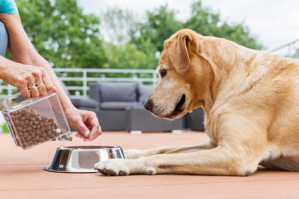 ラブラドル ・ レトリーバー犬のドッグフードを取得します。
