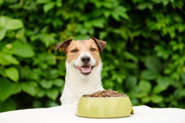 ボウルに乾燥した食糧の完全あるテーブルの後ろの犬