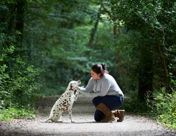 Woman training Dalmatian do...
