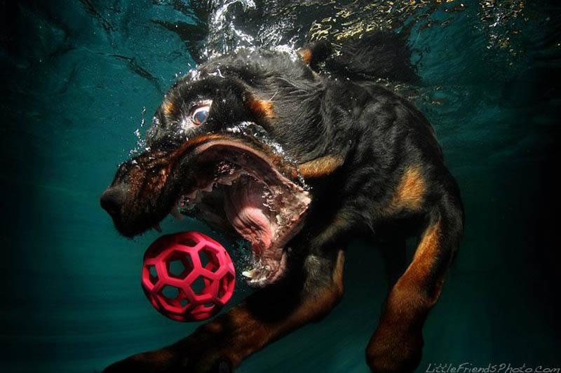犬の水中テニスボール写真が芸術的で面白い!ベストセラーにもなったセスキャスティールさんの写真8選!