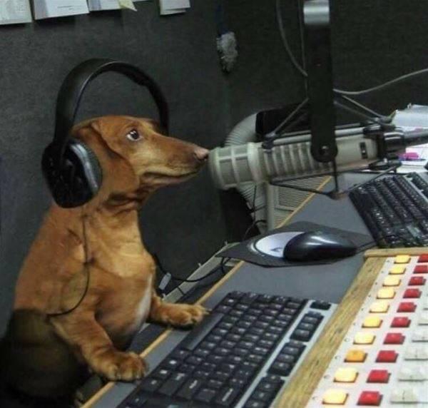 二度見不可避!君、本当に犬?と言いたくなるような面白い可愛い犬の写真7選!