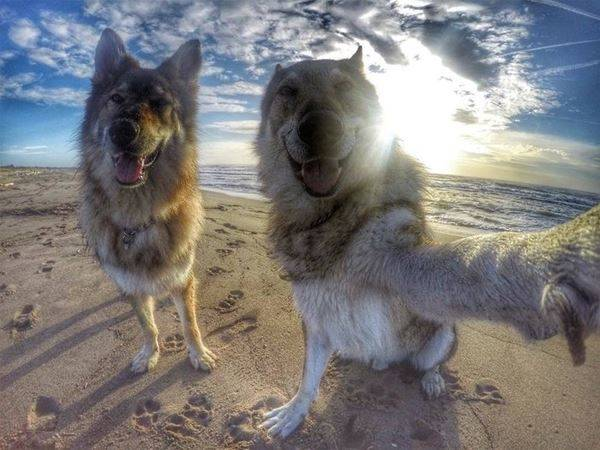 Taking A Great Selfie - funnydogsite.com (106)