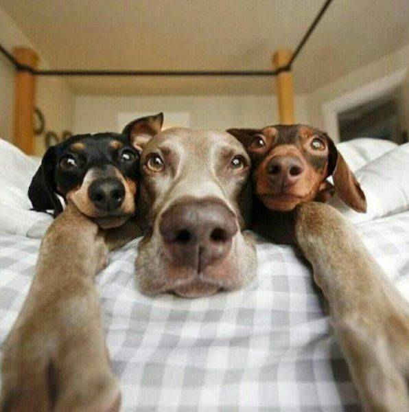 Doing Our Selfies - funnydogsite.com (109)