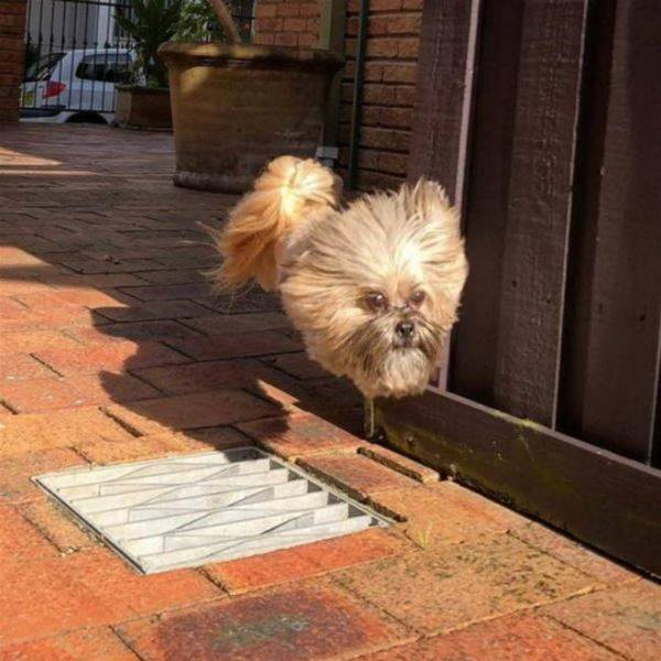 Flying Dog - funnydogsite.com (127)