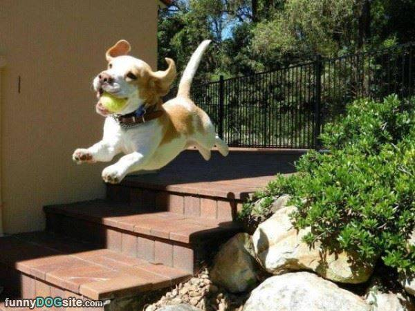 The Flying Puppy - funnydogsite.com (128)