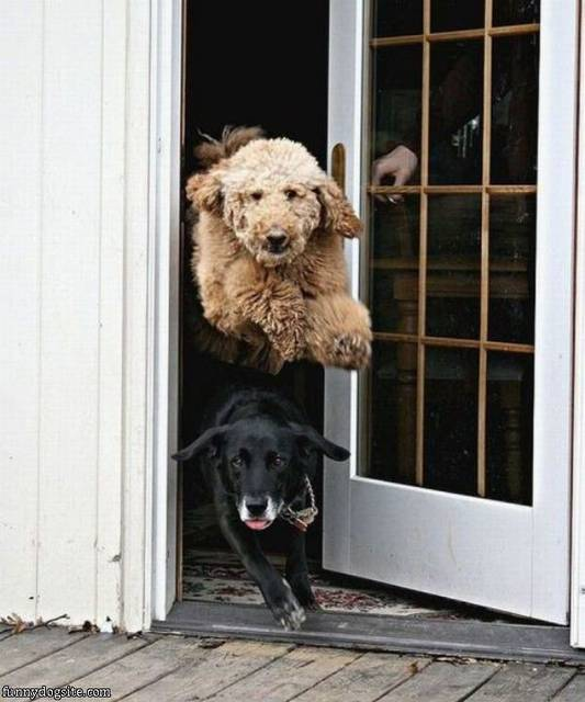 A Flying Dog - funnydogsite.com (130)