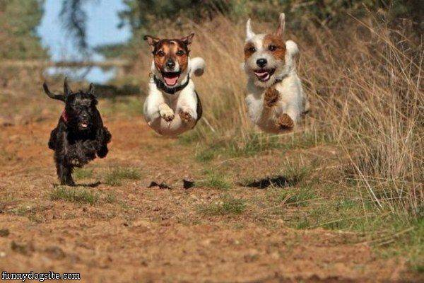 Flying Dog Team - funnydogsite.com (131)