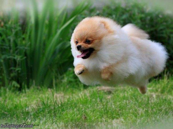 Flying Puff Ball - funnydogsite.com (133)
