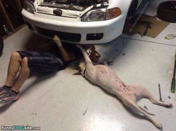 Fixing Up The Car - funnydogsite.com (388)