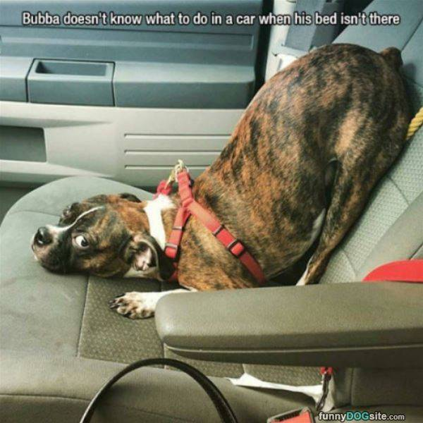 How Do I Car - funnydogsite.com (390)