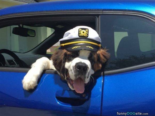 Hanging Out The Car - funnydogsite.com (391)