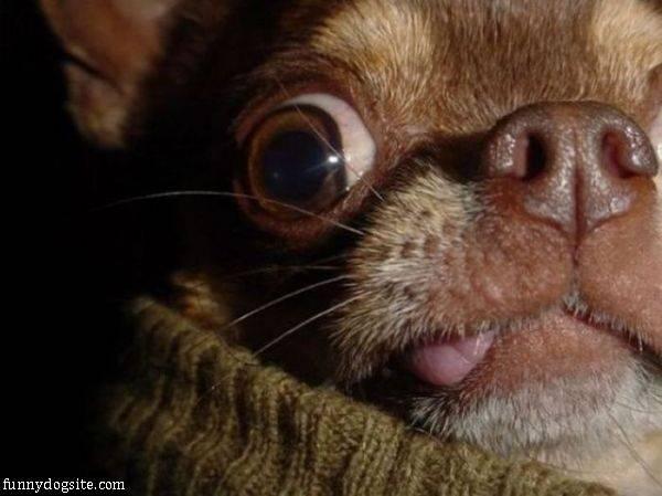 Extreme Closeup - funnydogsite.com (413)