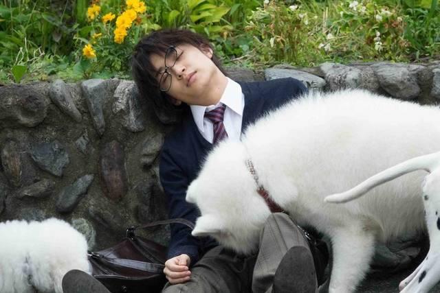 松岡広大が白い犬と戯れる