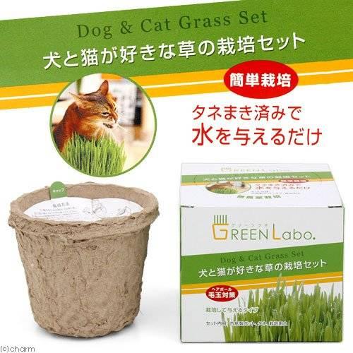 犬と猫が好きな草 栽培セット