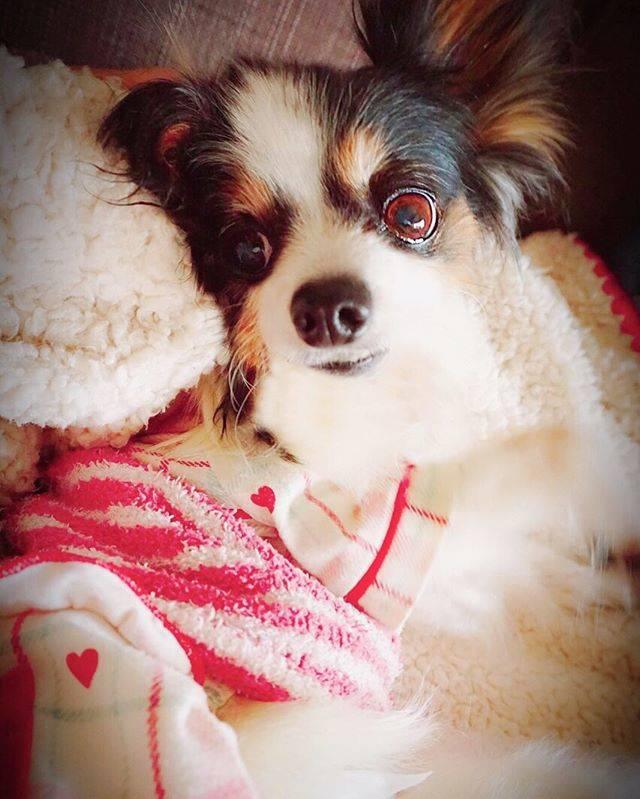 愛犬のインスタ運営には必須!Instagramの人気犬系ハッシュタグ7選!!
