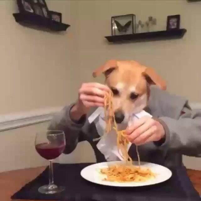 犬と人間の二人羽織!?Instagram#二人羽織から面白投稿動画を7つご紹介!