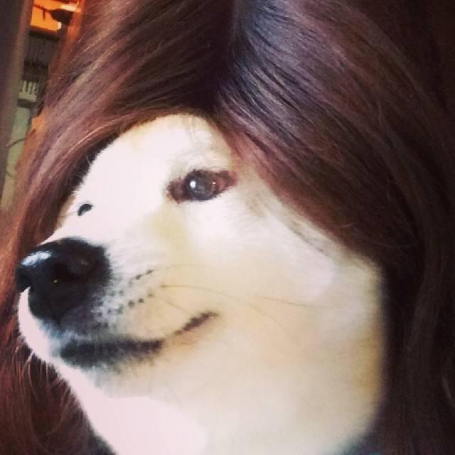 わんこだっておしゃれしたい!かつらを被ったおもしろ犬をInstagram「#カツラ犬」6選!!