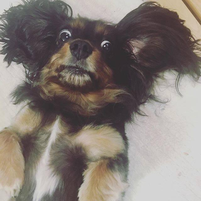 犬って本当に面白い!「#おもしろペット」より面白いわんこをご紹介!
