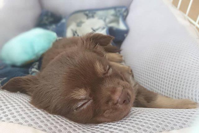 寝ている顔も可愛い・・気持ち良さそうに眠る幸せわんこ達を#いぬドルよりご紹介!【今日のPickUpいぬドル】