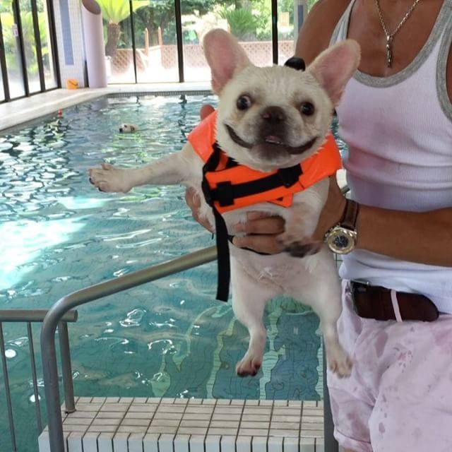 泳ぐ犬はやっぱり可愛い!一生懸命犬かきをするわんこ動画8選!!