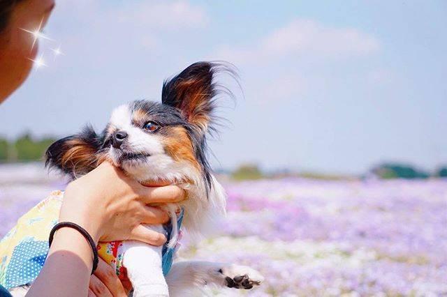犬×花!#いぬドルからわんこ写真家必見の「フラワーフォト!」【今日のPickUpいぬドル】