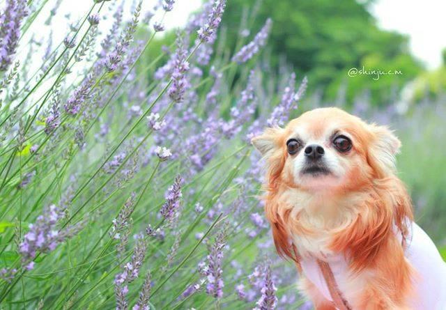 犬が引き立つ撮り方の上手い写真9選!#いぬドルよりご紹介!【今日のPickUpいぬドル】