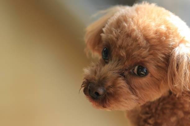 ほっこりスマイル犬!#いぬドルより笑うわんこ達7選!【今日のPickUpいぬドル】