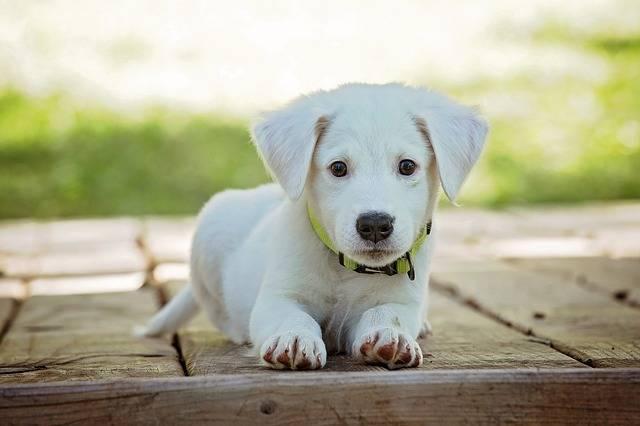 【わんこキャンプ】とは!?犬の「可愛い」「面白い」を届けるメディアが遂にスタート!