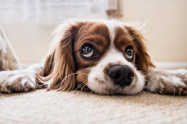 Dog Sad Waiting · Free photo on Pixabay (750)