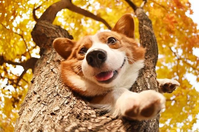 Pets · Free photo on Pixabay (797)