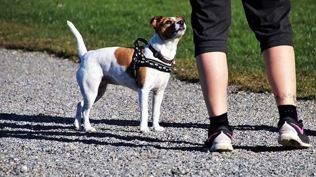 犬と一緒にお散歩ダイエット!長続きする秘訣とおすすめグッズをご紹介!