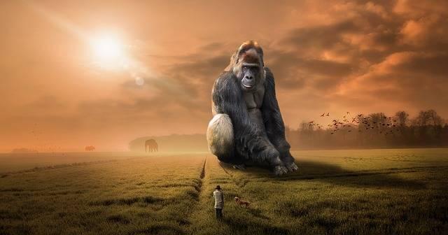 Animal Gorilla Ape · Free photo on Pixabay (887)