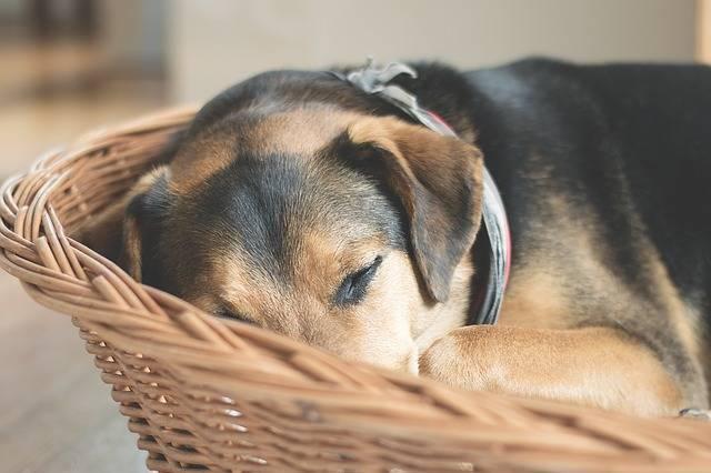 Dog Sleep Animal · Free photo on Pixabay (1064)