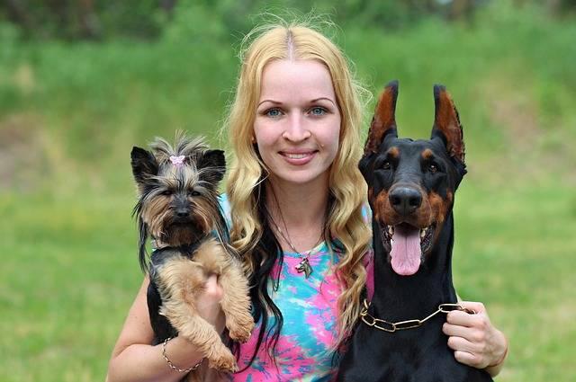自分の犬を有名、アイドルにするには?SNSの活用方法やペット事務所もご紹介!