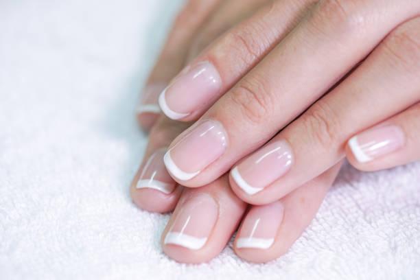 爪のはなし~爪の構造と役割~(1)