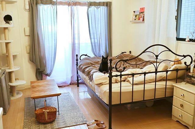 黒猫1匹と一緒に11畳の賃貸ワンルームで暮らしています。