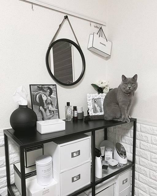 飼い猫のモカも棚の上などを自由にのぼって、くつろいで過ごしている様子。
