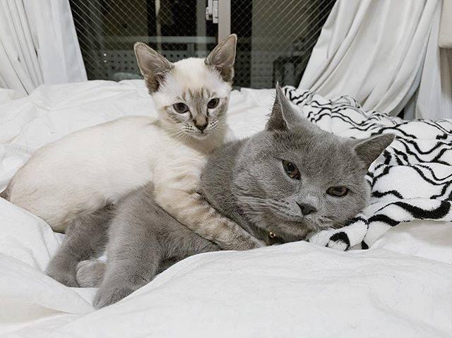 一目ぼれして飼い始めたロイ(右)と新入りのモカ(左)の2匹と暮らしています。