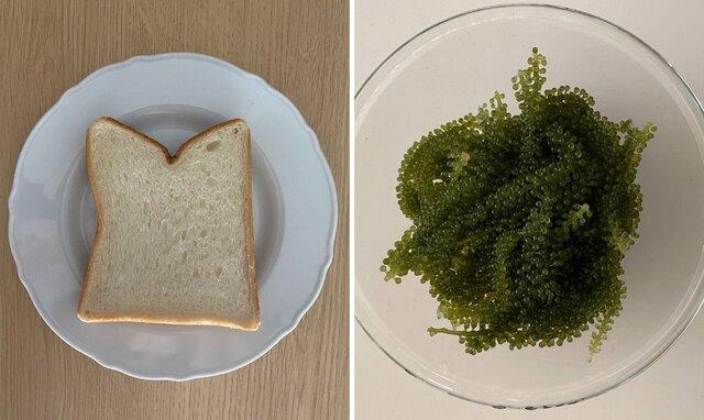 before(左:食パン、右:海ぶどう)