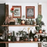 グリーン効果で部屋をおしゃれに! 植物を素敵に飾る3つのTIPS - とりぐら|一人暮らしの毎日がもっと楽しく