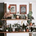 グリーン効果で部屋をおしゃれに! 植物を素敵に飾る3つのTIPS - とりぐら 一人暮らしの毎日がもっと楽しく