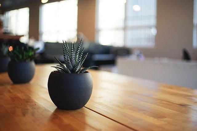 Plant Houseplant Indoor - Free photo on Pixabay (32234)
