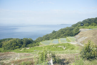 "THE STORY OF TESHIMA: GET BACK TRUE ""RICHNESS"""