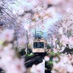 【九州エリア】おすすめドライブスポット!デートや観光。春に行きたい場所特集♡