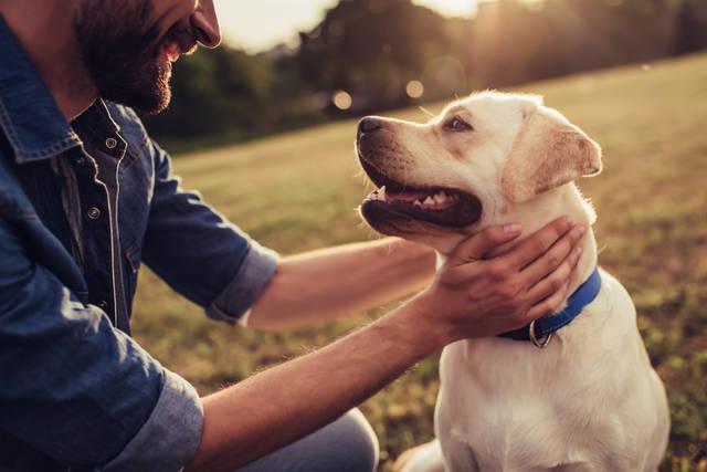 犬系男子の共通する特徴や性格・恋愛傾向まとめ!相性がいい相手はどんな人?