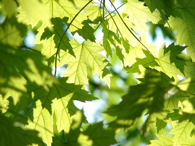 Leaves Summer Green · Free photo on Pixabay (27863)