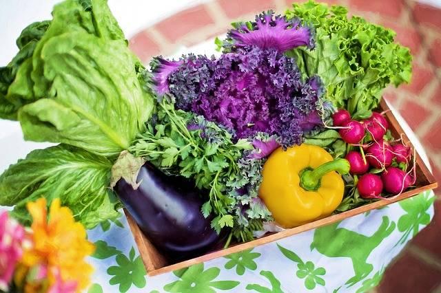 Vegetables Garden Harvest · Free photo on Pixabay (27942)